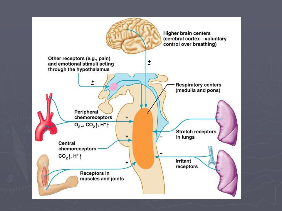 Geen alveolair plateau ► Bronchospasme, astma, COPD ► Geen plateau = geen betrouwbaar getal.