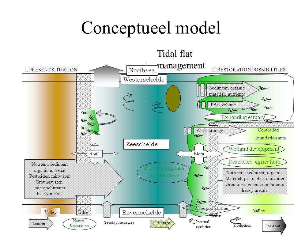 Valley Conceptueel model II. RESTORATION POSSIBILITIES Sediment, organic material, nutrients Controlled Inundation area Tidal volume Zeeschelde I. PRE