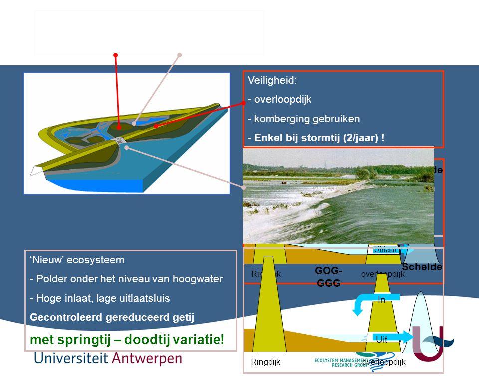 41 Ecologie: - Introductie van een estuarien systeem - Eb en vloed in de polder - Twee maal per dag! Ringdijk overloopdijk GOG Schelde Uitlaat polder