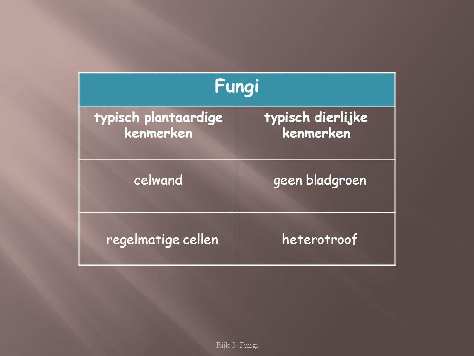 Rijk 3: Fungi Fungi typisch plantaardige kenmerken typisch dierlijke kenmerken celwand regelmatige cellen geen bladgroen heterotroof