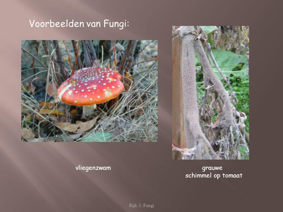 Rijk 3: Fungi Voorbeelden van Fungi: vliegenzwam grauwe schimmel op tomaat