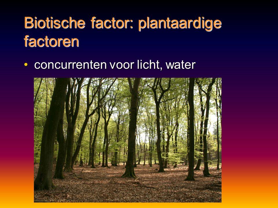 Biotische factor: plantaardige factoren concurrenten voor licht, waterconcurrenten voor licht, water