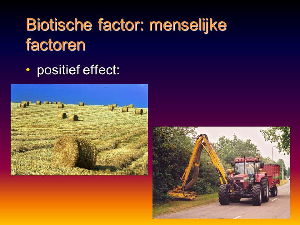 Biotische factor: menselijke factoren positief effect:positief effect: