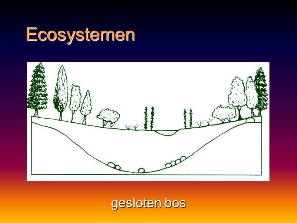 Ecosystemen gesloten bos