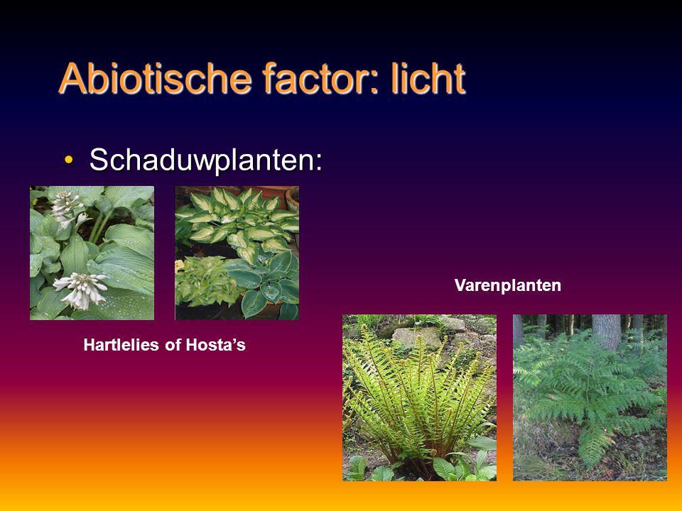 Abiotische factor: licht Schaduwplanten:Schaduwplanten: Hartlelies of Hosta's Varenplanten