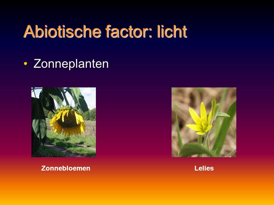 Abiotische factor: licht ZonneplantenZonneplanten ZonnebloemenLelies