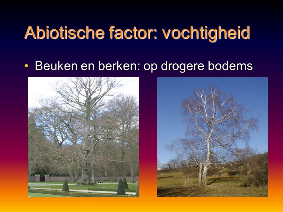 Abiotische factor: vochtigheid Beuken en berken: op drogere bodemsBeuken en berken: op drogere bodems
