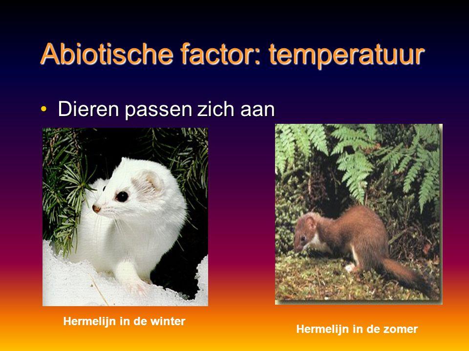 Abiotische factor: temperatuur Dieren passen zich aanDieren passen zich aan Hermelijn in de winter Hermelijn in de zomer