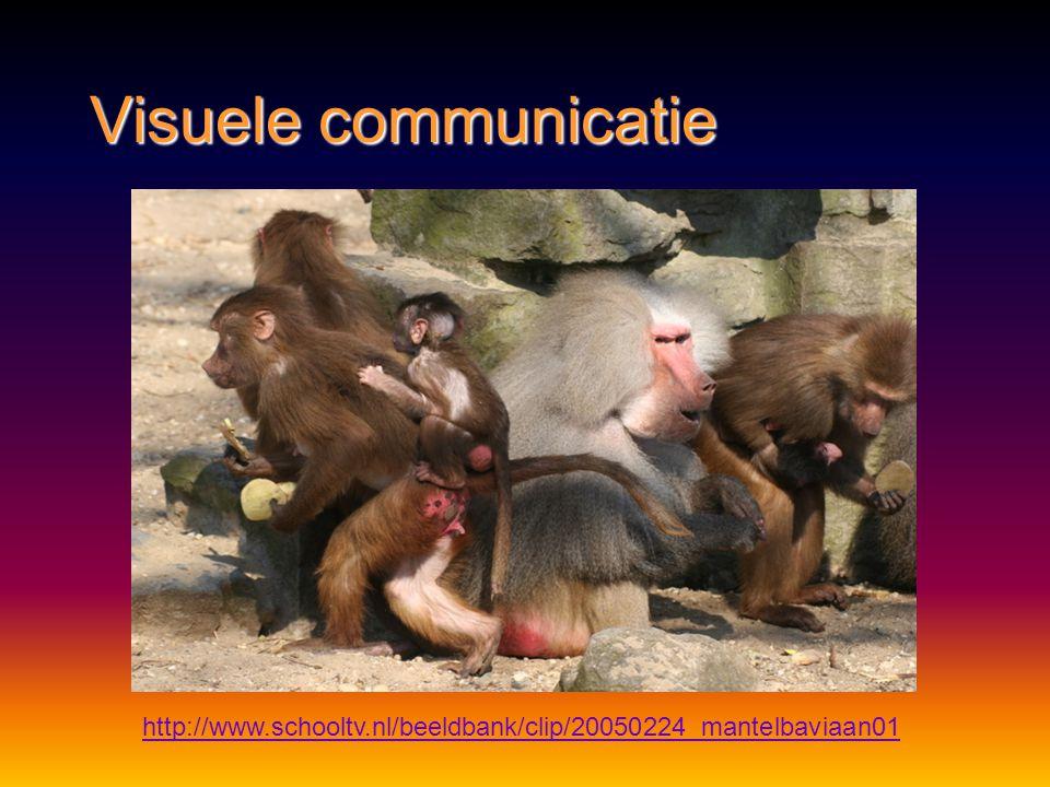 Visuele communicatie http://www.schooltv.nl/beeldbank/clip/20050525_bcgorilla01 sociale status