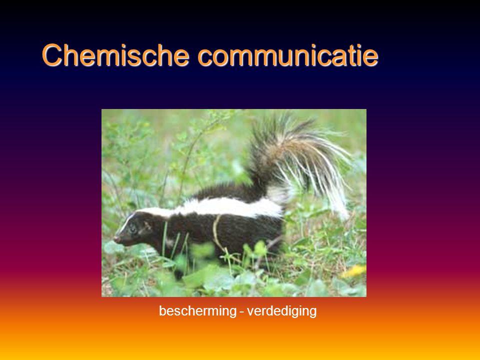 Chemische communicatie in stand houden van de staat