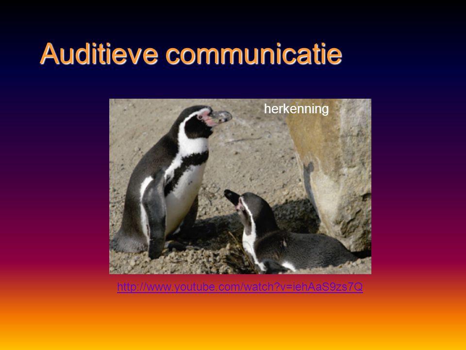 Auditieve communicatie http://www.youtube.com/watch?v=xsTjDygy3Wc waarschuwing