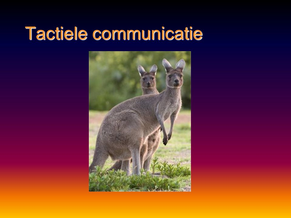 Tactiele communicatie http://www.schooltv.nl/beeldbank/clip/20070125_hazen01