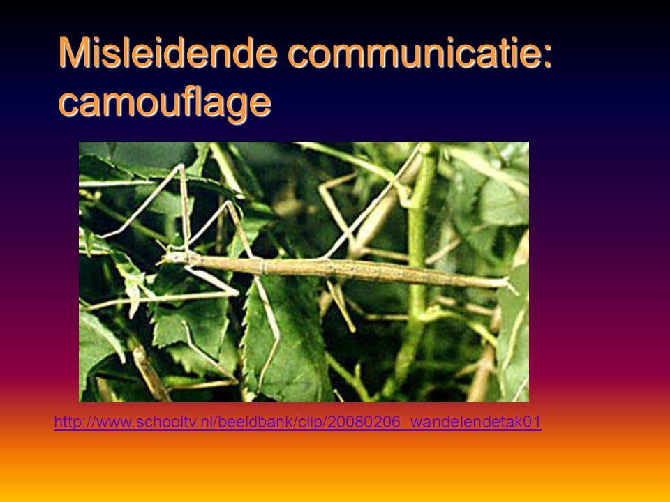 Misleidende communicatie CamouflageCamouflage dieren passen op actieve wijze hun vorm of kleur aandieren passen op actieve wijze hun vorm of kleur aan