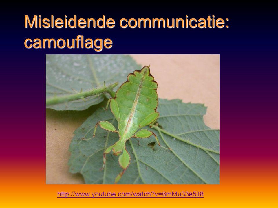 Misleidende communicatie: camouflage http://www.schooltv.nl/beeldbank/clip/20080206_wandelendetak01