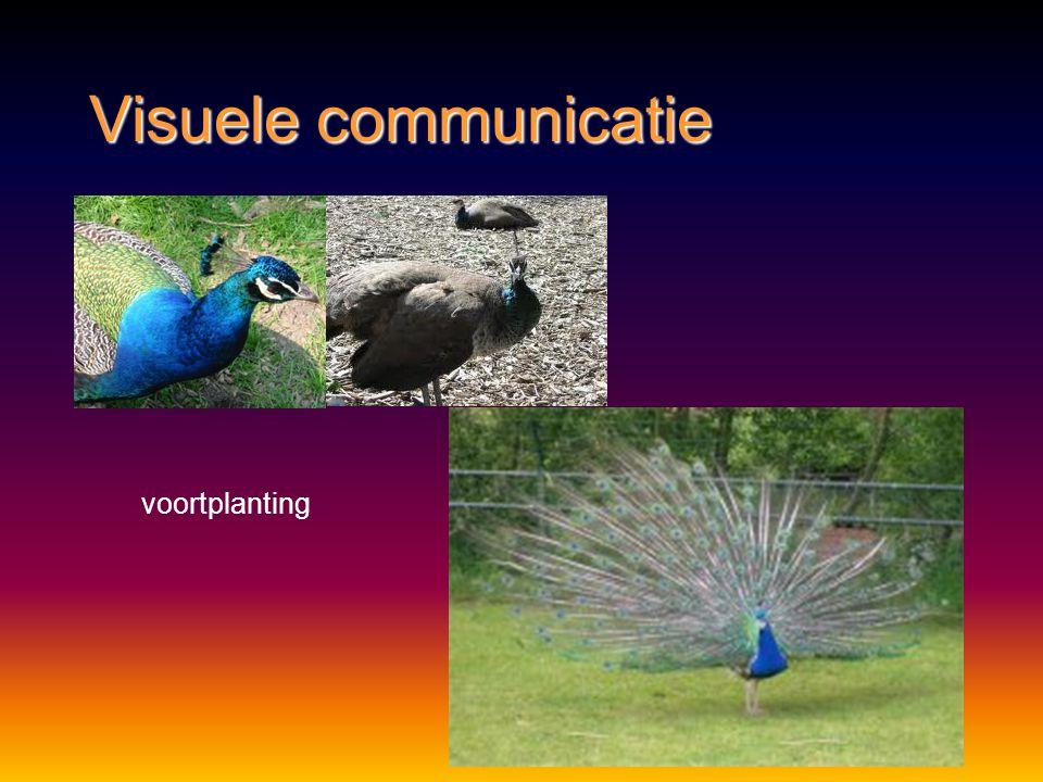 Visuele communicatie Methode:Methode: lichaamshoudinglichaamshouding bewegingbeweging kleurpatronenkleurpatronen Functie:Functie: voortplantingvoortpl