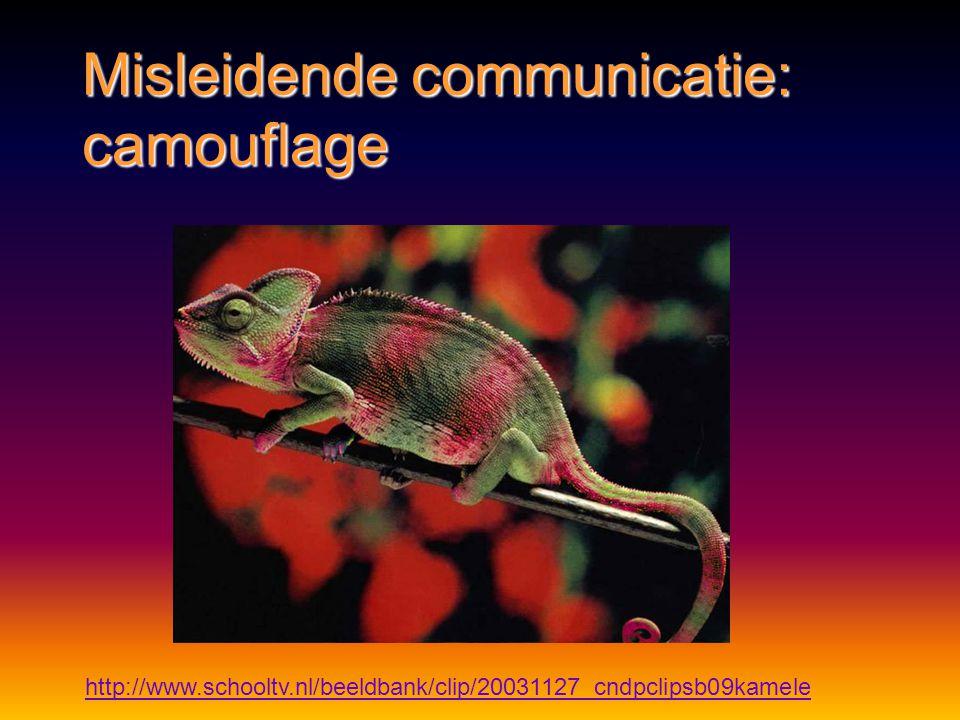http://www.schooltv.nl/beeldbank/clip/20080206_steenvis01