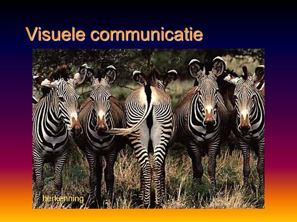 Visuele communicatie http://nl.wikipedia.org/wiki/Bestand:Feuersalamander.ogg waarschuwing
