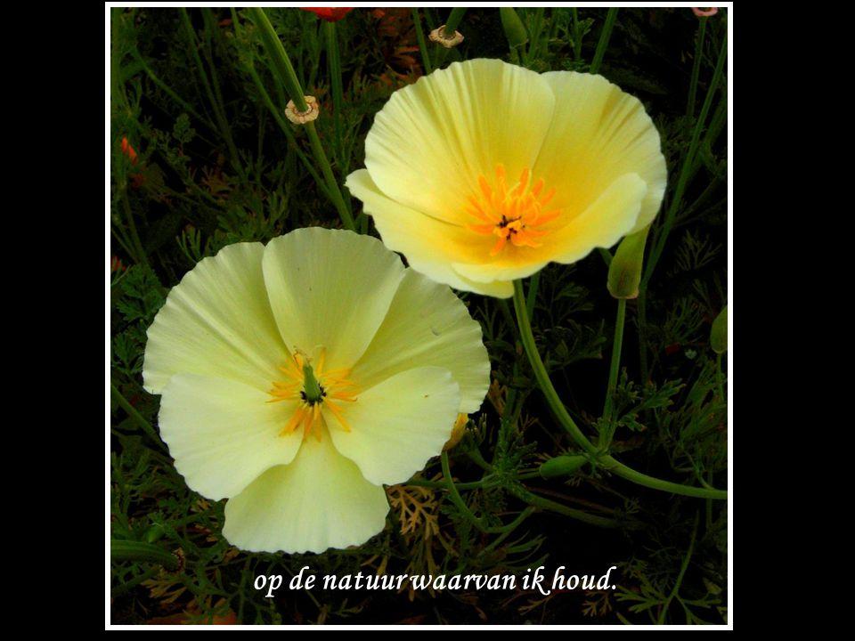 op de natuur waarvan ik houd.