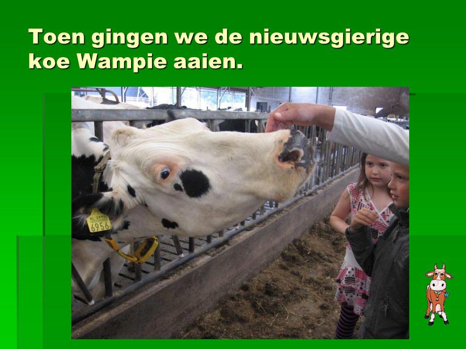 Toen gingen we de nieuwsgierige koe Wampie aaien.