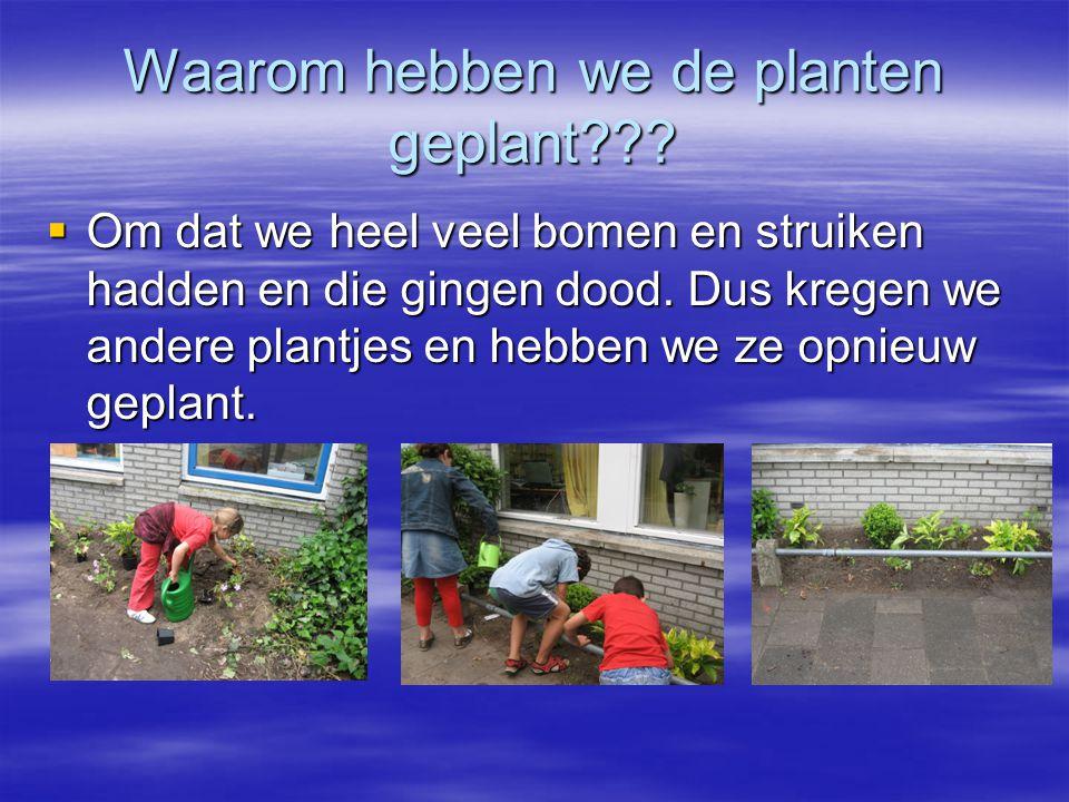 Waarom hebben we de planten geplant??.