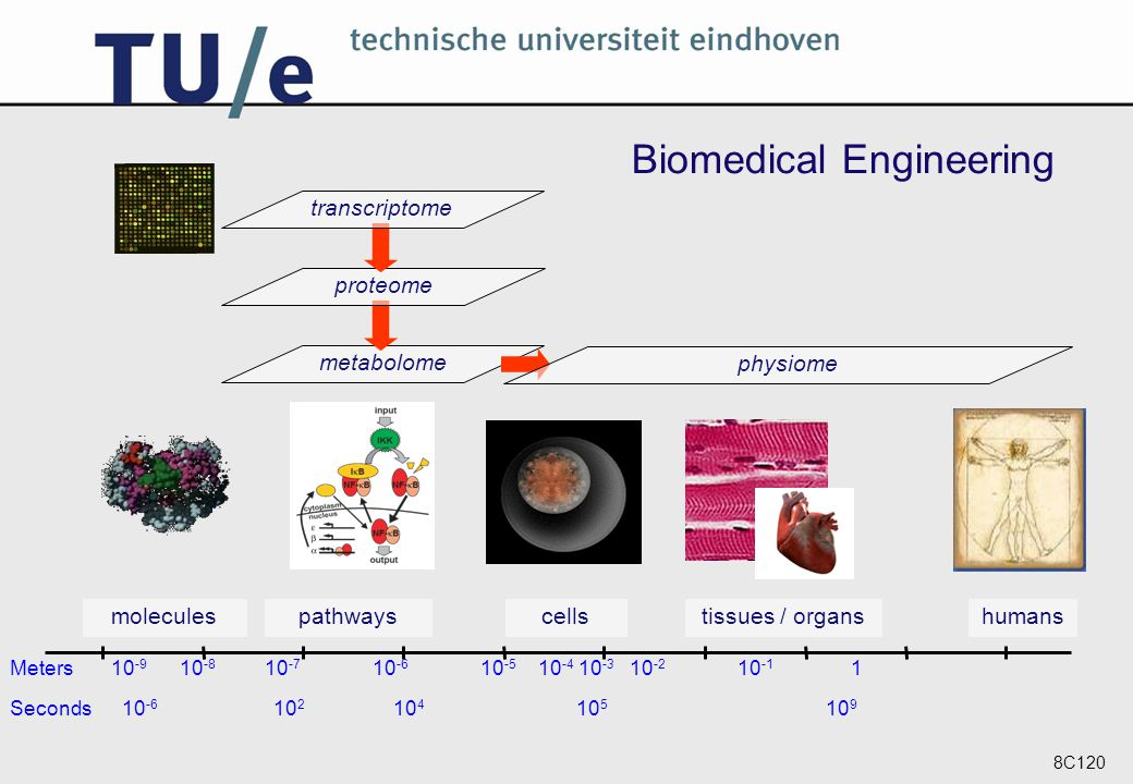 8C120 Biomedical Engineering metabolome physiome humanstissues / organs cellspathwaysmolecules Seconds 10 -6 10 2 10 4 10 5 10 9 proteometranscriptome Meters 10 -9 10 -8 10 -7 10 -6 10 -5 10 -4 10 -3 10 -2 10 -1 1