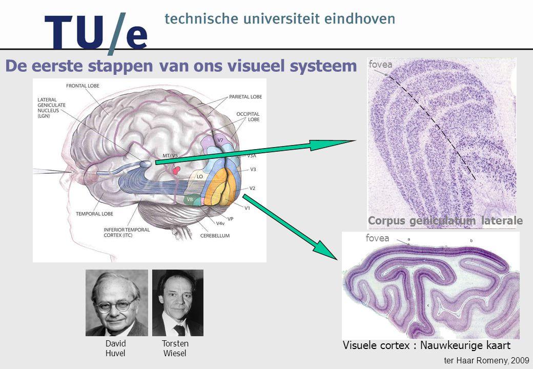 ter Haar Romeny, 2009 De eerste stappen van ons visueel systeem Corpus geniculatum laterale fovea David Huvel Torsten Wiesel Visuele cortex : Nauwkeurige kaart fovea