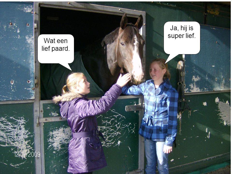 Ja, hij is super lief. Wat een lief paard.