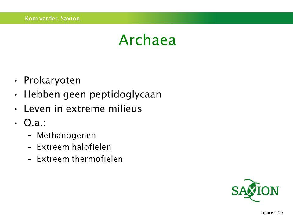 Kom verder. Saxion. Prokaryoten Hebben geen peptidoglycaan Leven in extreme milieus O.a.: –Methanogenen –Extreem halofielen –Extreem thermofielen Arch