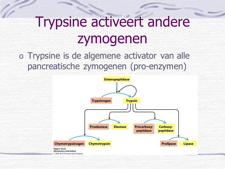 Trypsine activeert andere zymogenen o Trypsine is de algemene activator van alle pancreatische zymogenen (pro-enzymen)