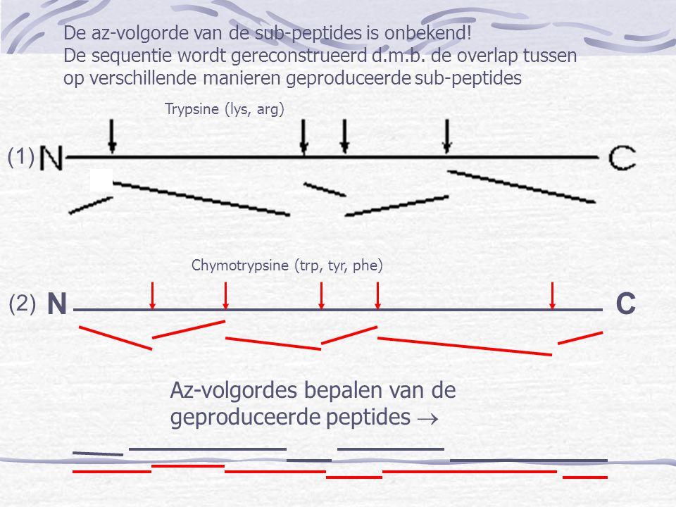 NC Trypsine (lys, arg) Chymotrypsine (trp, tyr, phe) De az-volgorde van de sub-peptides is onbekend! De sequentie wordt gereconstrueerd d.m.b. de over