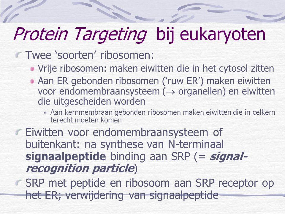 Twee 'soorten' ribosomen: Vrije ribosomen: maken eiwitten die in het cytosol zitten Aan ER gebonden ribosomen ('ruw ER') maken eiwitten voor endomembr