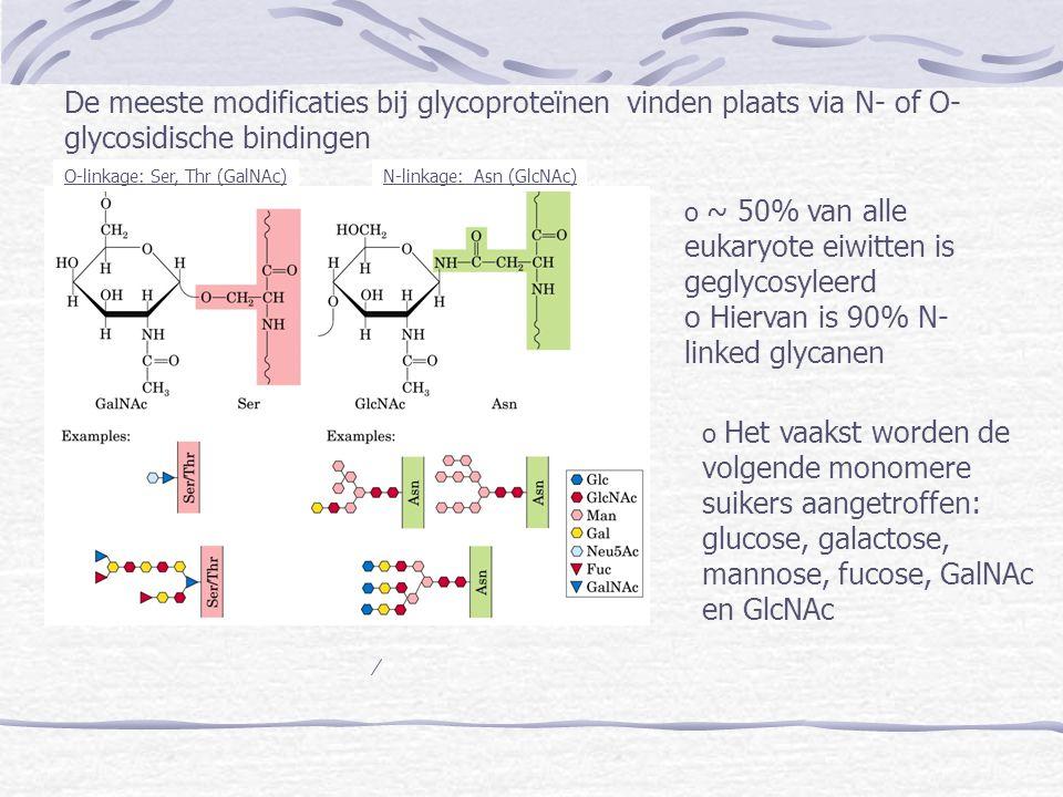 De meeste modificaties bij glycoproteïnen vinden plaats via N- of O- glycosidische bindingen O-linkage: Ser, Thr (GalNAc)N-linkage: Asn (GlcNAc) o ~ 5