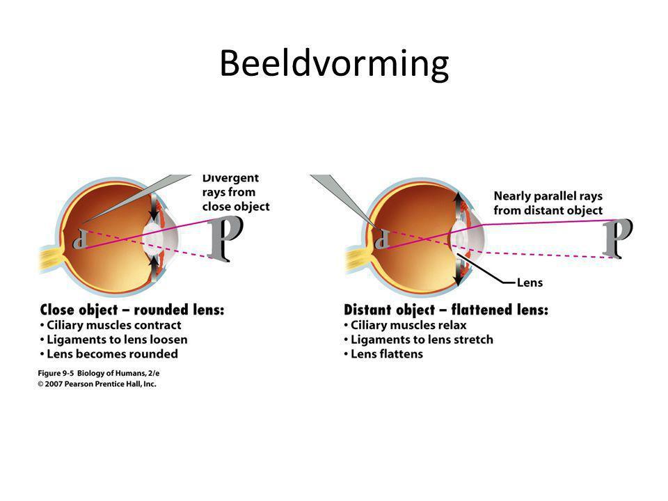 Verschillende lagen van de oogbol Bindweefsellaag Vaatweefsellaag Netvlies