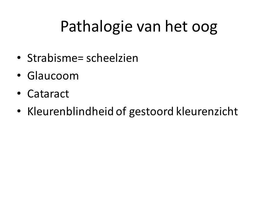 Pathalogie van het oog Strabisme= scheelzien Glaucoom Cataract Kleurenblindheid of gestoord kleurenzicht