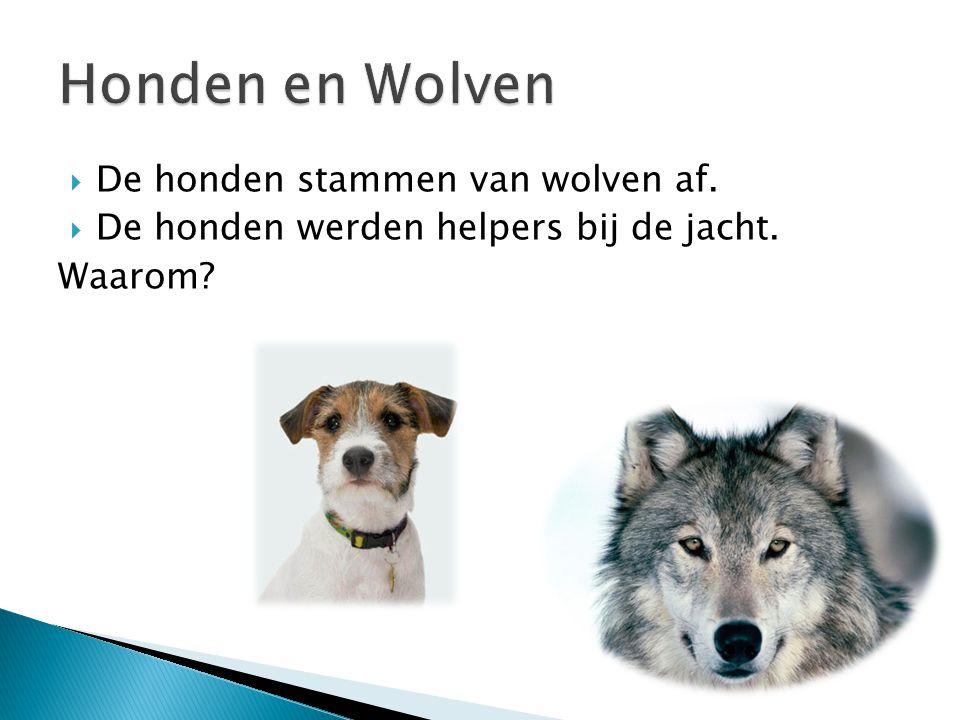  De honden stammen van wolven af.  De honden werden helpers bij de jacht. Waarom?