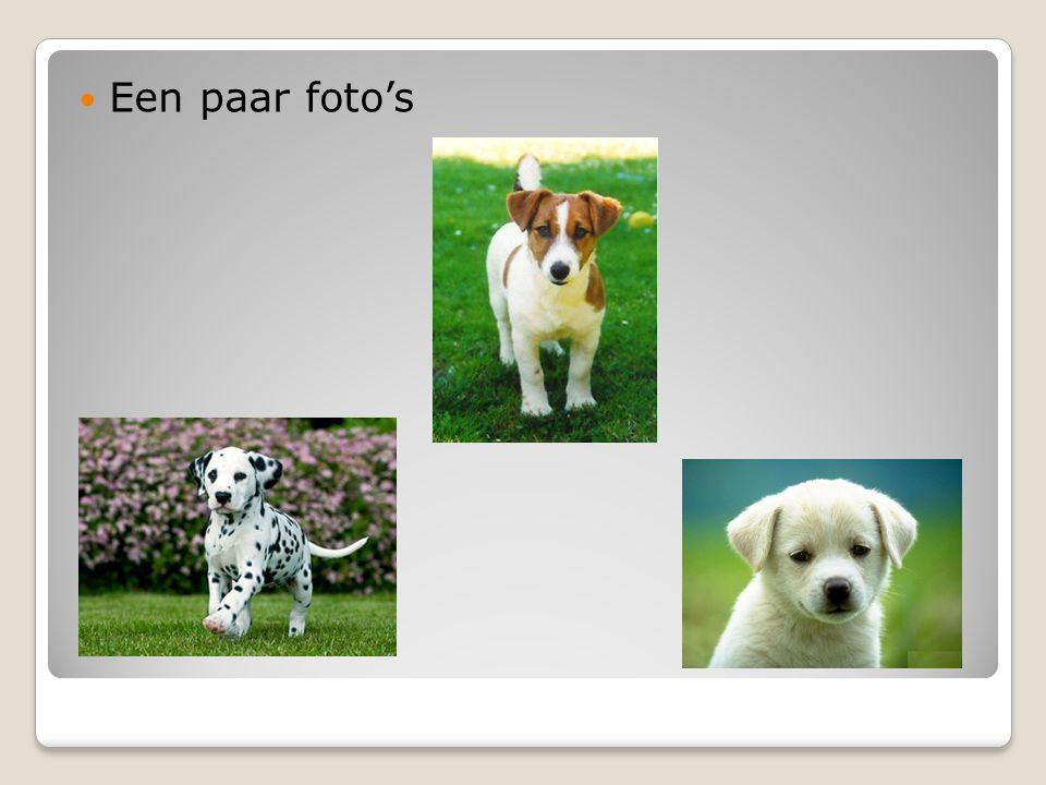Weetjes… De hond is een zoogdier, hij kan van 50cm tot 60cm groot worden.