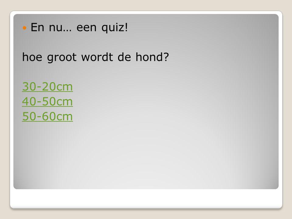 En nu… een quiz! hoe groot wordt de hond? 30-20cm 40-50cm 50-60cm