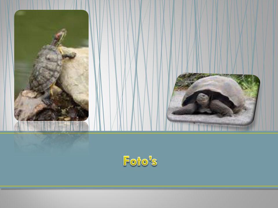 Wat heeft een schildpad op zijn rug.