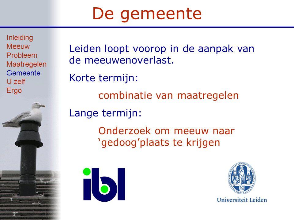 De gemeente Leiden loopt voorop in de aanpak van de meeuwenoverlast. Korte termijn: combinatie van maatregelen Lange termijn: Onderzoek om meeuw naar