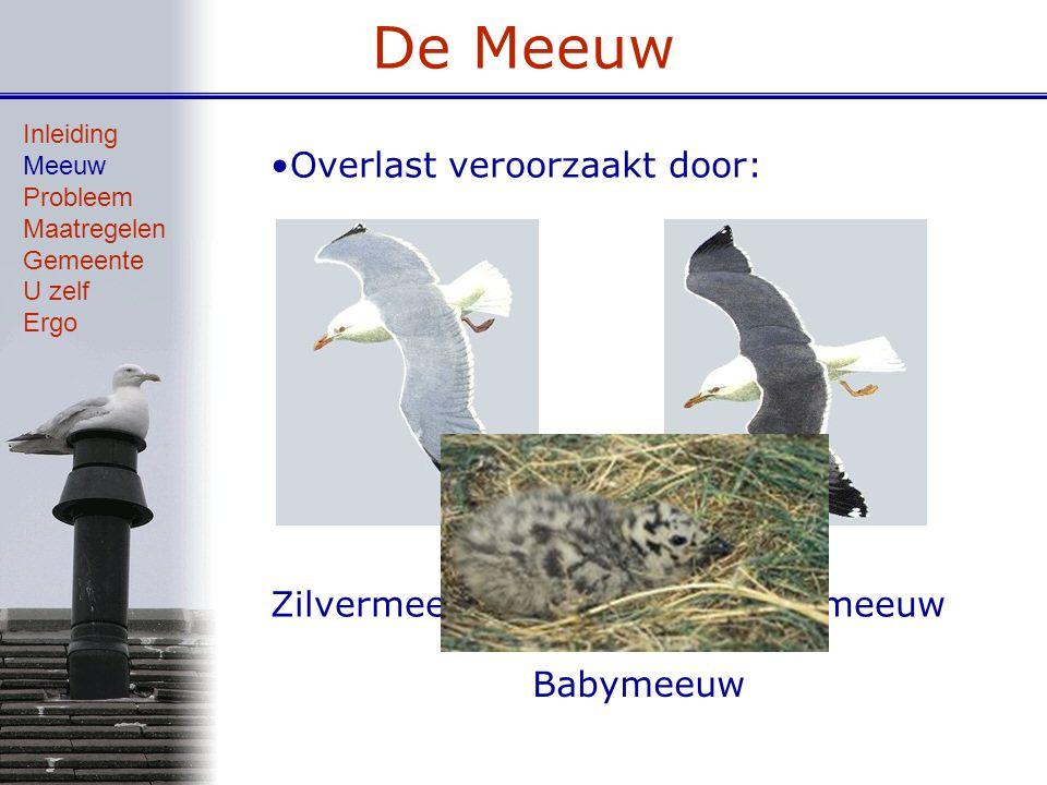 De Meeuw 1988 Inleiding Meeuw Probleem Maatregelen Gemeente U zelf Ergo Opkomst vos Recreatiedruk Veilige nestplekken Voedsel