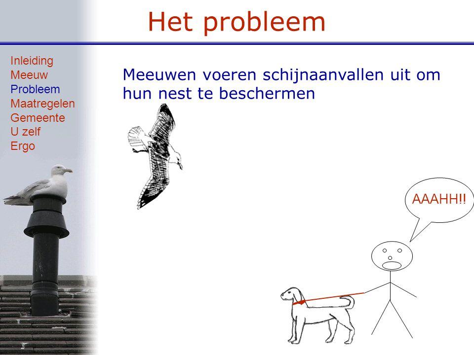 Het probleem Meeuwen voeren schijnaanvallen uit om hun nest te beschermen Inleiding Meeuw Probleem Maatregelen Gemeente U zelf Ergo AAAHH!!