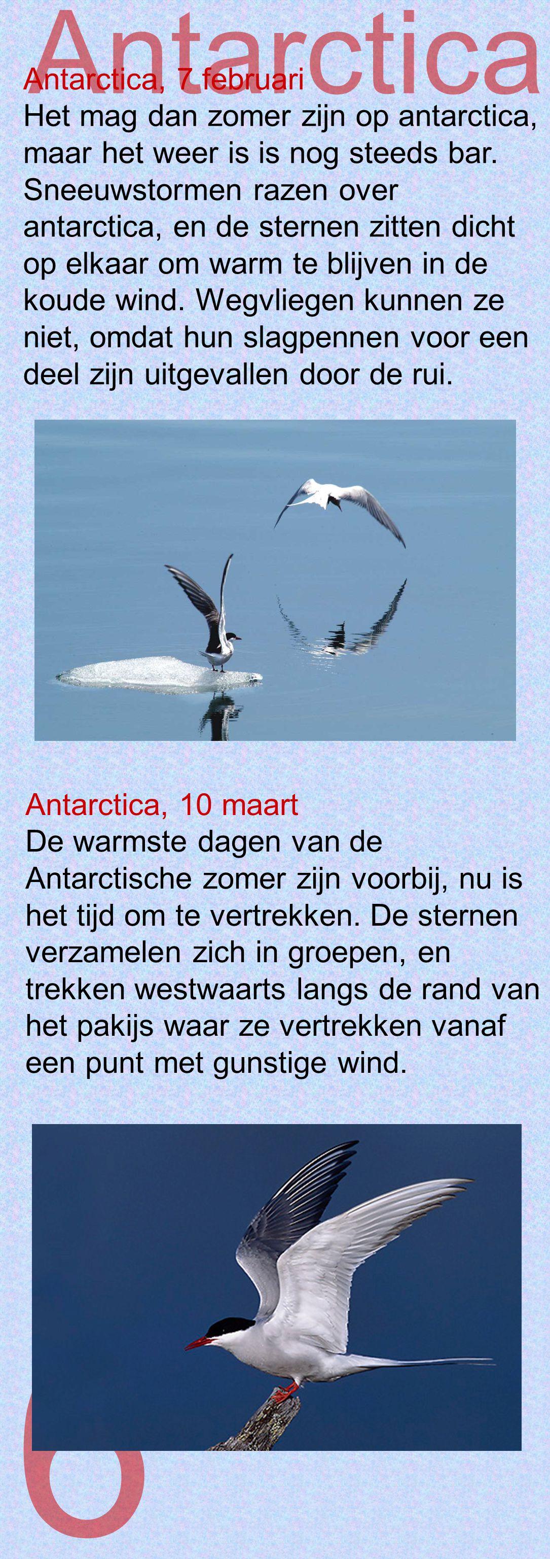 6 Antarctica Antarctica, 7 februari Het mag dan zomer zijn op antarctica, maar het weer is is nog steeds bar. Sneeuwstormen razen over antarctica, en