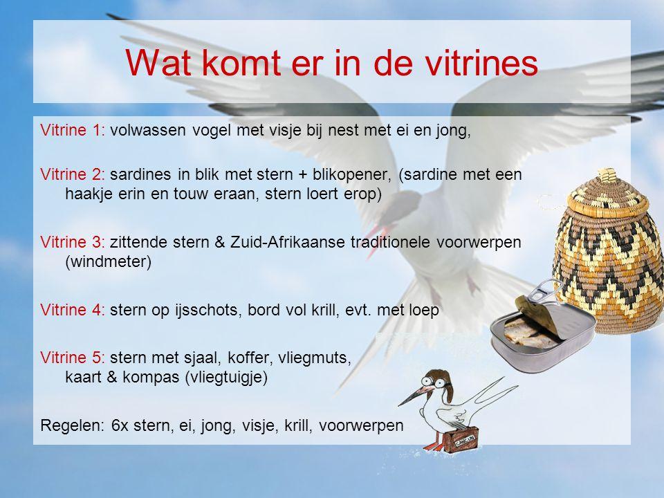 Wat komt er in de vitrines Vitrine 1: volwassen vogel met visje bij nest met ei en jong, Vitrine 2: sardines in blik met stern + blikopener, (sardine met een haakje erin en touw eraan, stern loert erop) Vitrine 3: zittende stern & Zuid-Afrikaanse traditionele voorwerpen (windmeter) Vitrine 4: stern op ijsschots, bord vol krill, evt.