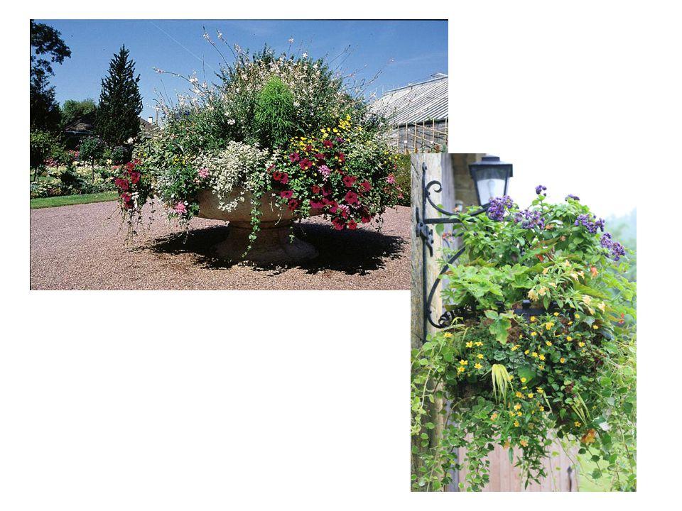 In de botanische tuin van Bayeux een schaal met eenjarige planten.