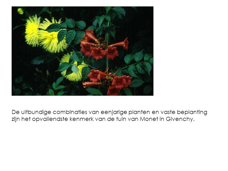 Campsis grandiflora is de trompetklimmer van de wat warmere streken.