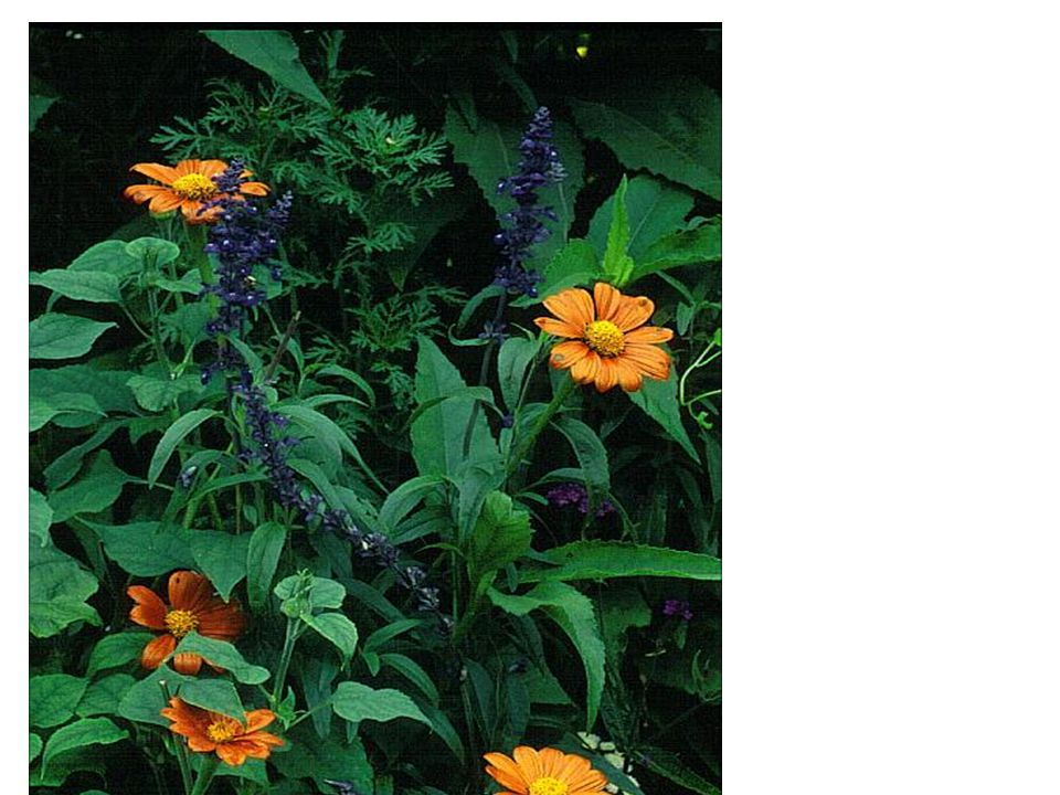 Ook in de tuin van Monet gefotografeerd
