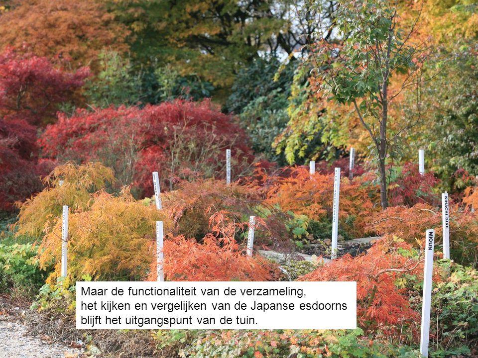 Maar de functionaliteit van de verzameling, het kijken en vergelijken van de Japanse esdoorns blijft het uitgangspunt van de tuin.