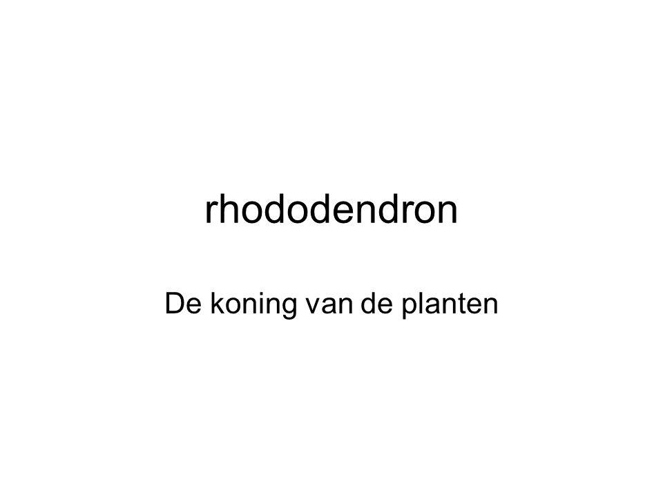 rhododendron De koning van de planten