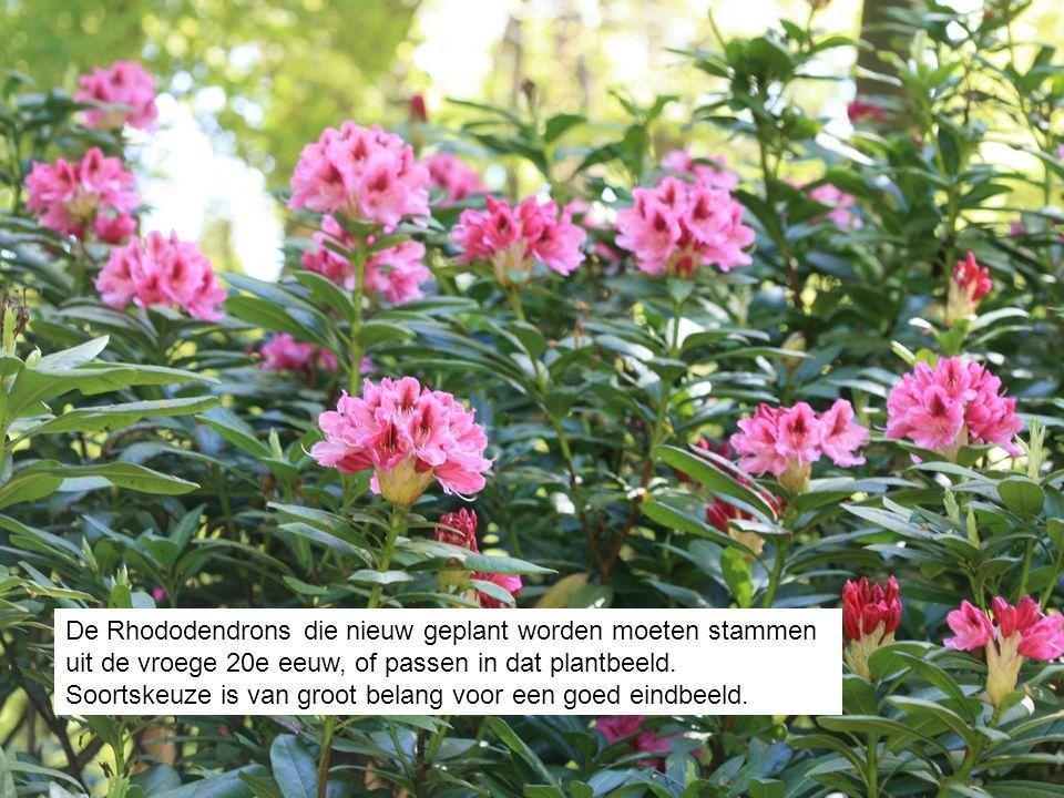 De Rhododendrons die nieuw geplant worden moeten stammen uit de vroege 20e eeuw, of passen in dat plantbeeld. Soortskeuze is van groot belang voor een