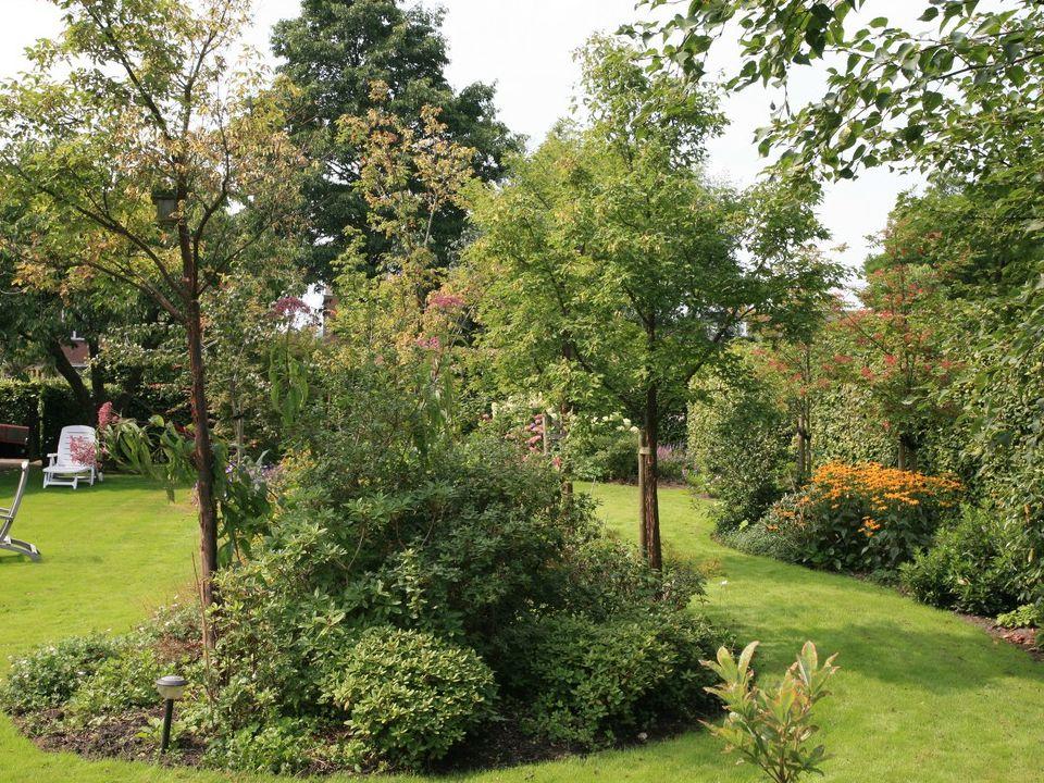Picrasma quassioides, een klein boompje dat de huizen achter de tuin een beetje uit het zicht moet nemen.